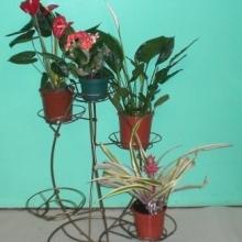 Тюльпан на 5 горшков